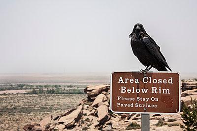 Petrified forest crow - p1691m2288635 by Roberto Berdini Bokeh