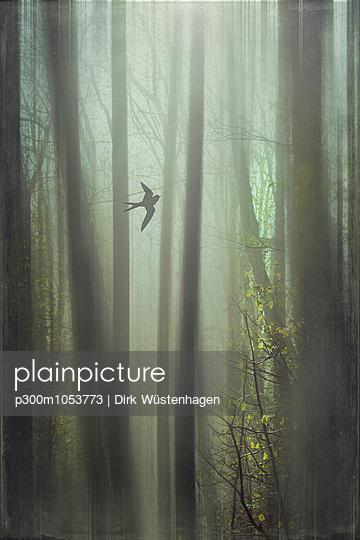 Flying bird, forest, digitally manipulated