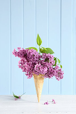 Lilac blossoms placed on ice cream cone - p237m2277982 by Thordis Rüggeberg