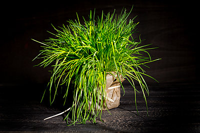 Chives in pot - p300m1166569 by Roman Märzinger