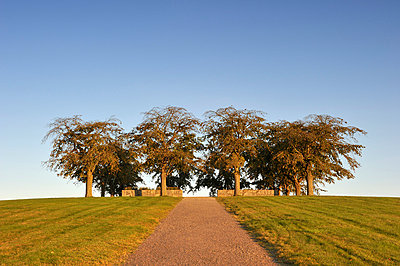 Churchyard with trees under blue sky - p575m714934 by Stefan Ortenblad