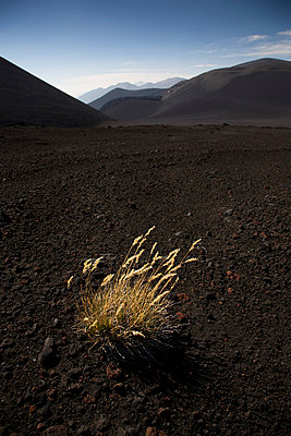Volcano and plants in Chile - p6280414 by Franco Cozzo