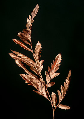 Golden plant - p971m1146702 by Reilika Landen
