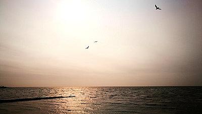 Nordsee - p551m1585088 von Kai Peters