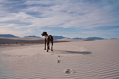 Dog standing at desert against cloudy sky - p1166m1544757 by Cavan Social