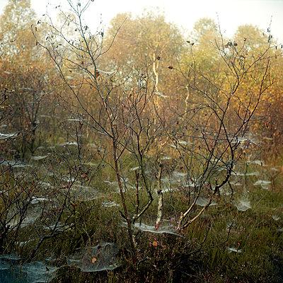 Autumn - p1186m972788 by Christine Henke