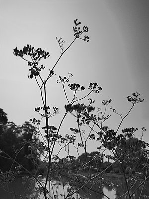 Waters and plants - p945m2215214 by aurelia frey