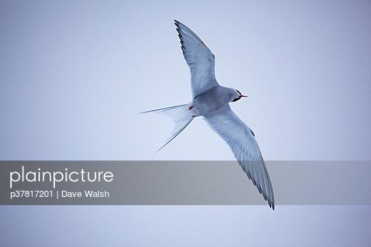 p37817201 von Dave Walsh