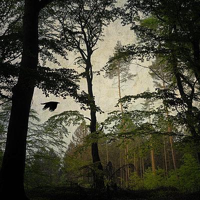 Crossing A Forest - p1633m2210054 von Bernd Webler