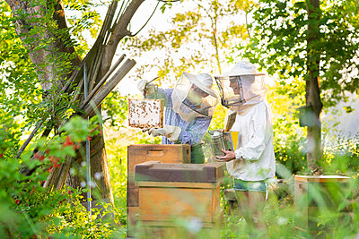 Father and adult daughter examining beehives in spring - p300m2264568 by Annika List