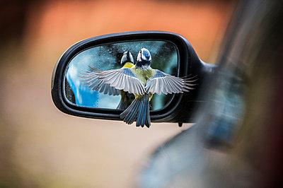 Bird near side mirror - p312m2050677 by Fredrik Schlyter