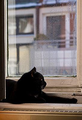 Windowsill - p7790005 by Luis Gervasi