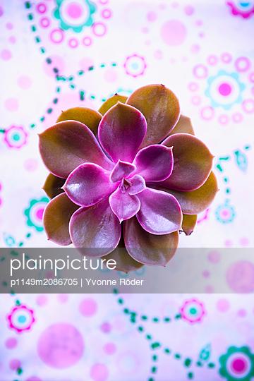 Succulent - p1149m2086705 by Yvonne Röder
