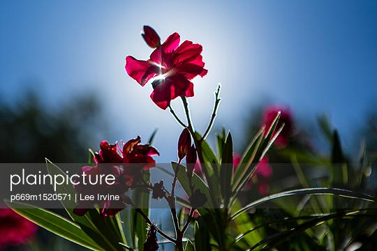 p669m1520571 von Lee Irvine