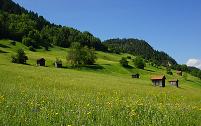 Alpine meadow - p162m925851 by Beate Bussenius