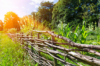 Traditional woven wooden fence along field - p429m1156313 by Henglein and Steets