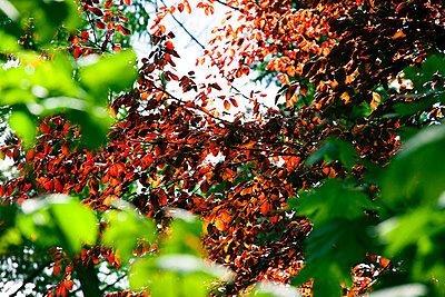 Blätter im Wind - p4320418 von mia takahara