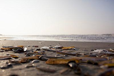 Shells and algae - p5861742 by Kniel Synnatzschke
