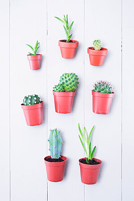 Small cacti and succulents - p1149m2027272 by Yvonne Röder