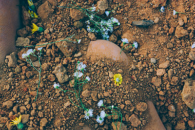 Flower and Dirt Grave Detail - p1262m1072843 by Maryanne Gobble