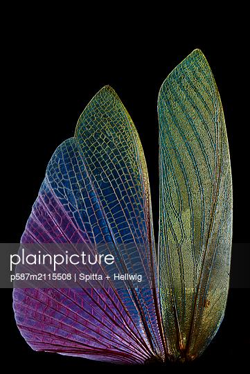 Glassy wings - p587m2115508 by Spitta + Hellwig