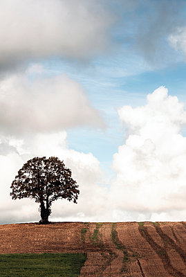 Burgundy - p1245m1043411 by Catherine Minala