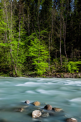 Bregenz Forest - p248m1028094 by BY