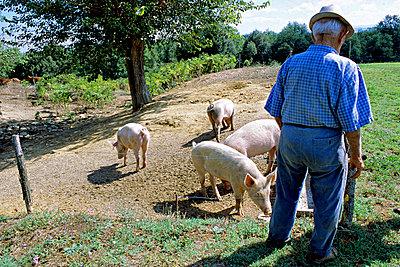 Bauer mit Schweinen - p2270730 von Uwe Nölke
