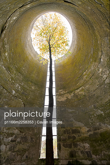 A Tree Grows Up Through a Tall Abandoned Silo - p1166m2258353 by Cavan Images
