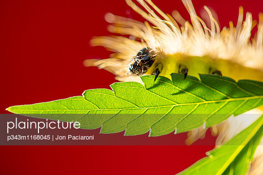 p343m1168045 von Jon Paciaroni