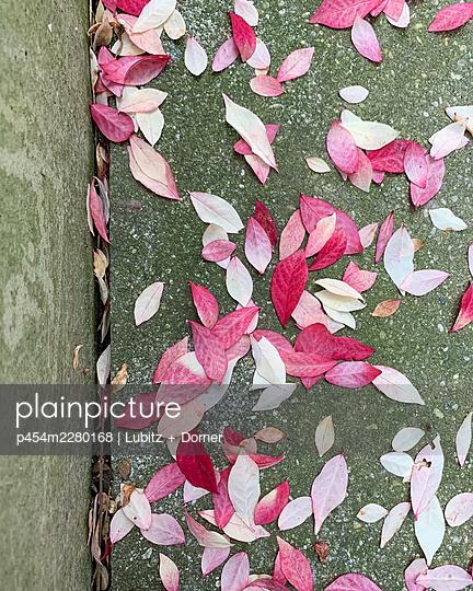 Pink little leaves - p454m2280168 by Lubitz + Dorner