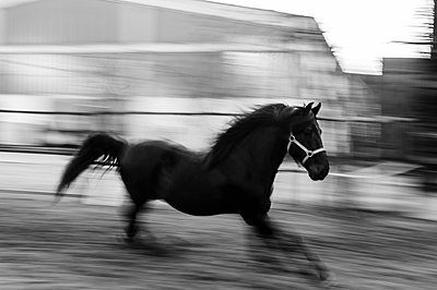 Stallion - p1085m855338 by David Carreno Hansen