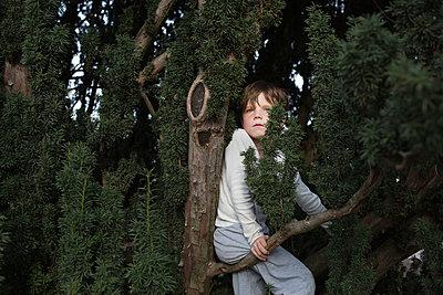 Junge sitzt im Baum - p1308m2247476 von felice douglas