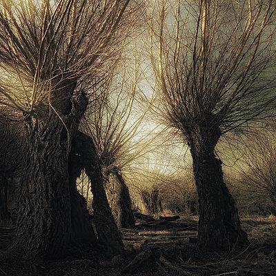 Hunting Ghosts - p1633m2208941 by Bernd Webler