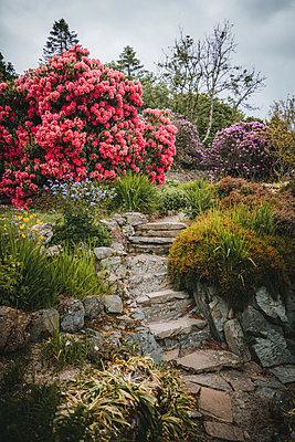 Stone steps in a park, Castle Ward, Newcastle, Norhern Ireland - p1681m2283643 by Juan Alfonso Solis