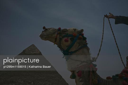 Kamel vor Pyramide - p1295m1159015 von Katharina Bauer
