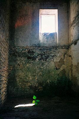 Neuanfang - p1027m919497 von Carola Björk
