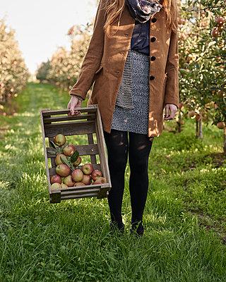 Apfelernte - p1124m1069625 von Willing-Holtz
