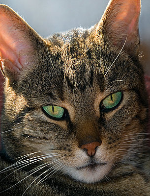 Cat With Green Eyes - p1562m2164351 by chinch gryniewicz