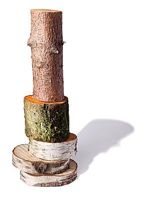 Baumstämme - p237m1123726 von Thordis Rüggeberg