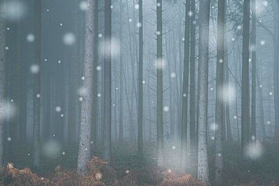 Winterwald - p401m1215404 von Frank Baquet