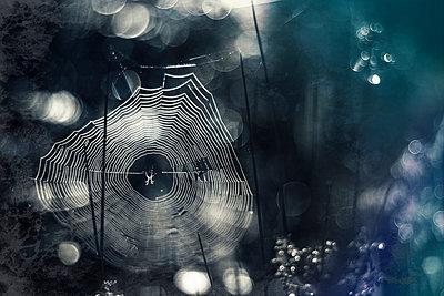 Germany, Bavaria, View of morning dew on spider web - p300m926396f by Dirk Wüstenhagen