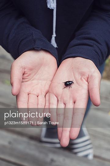 hands holding a bug - p1323m1589171 von Sarah Toure