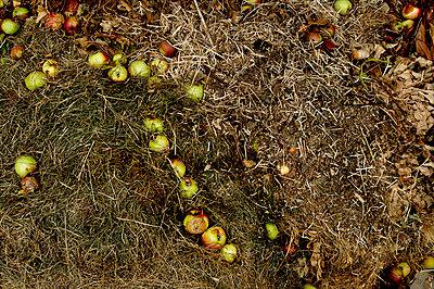 Verfaulende Äpfel - p5671145 von Ernesto Timor