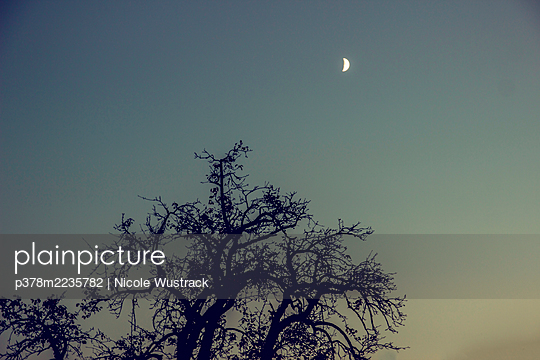 Silhouette of tree under moon - p378m2235782 by Nicole Wustrack