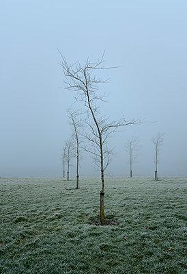 Winter in Friesland - p1132m973431 von Mischa Keijser