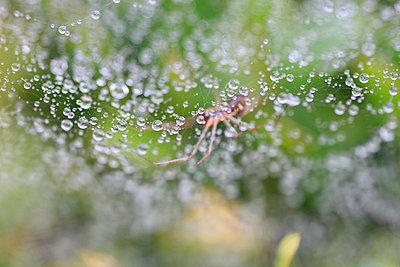 Water on cobweb - p1790652 by Roland Schneider