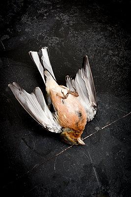 p451m2152496 by Anja Weber-Decker