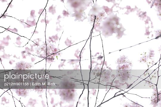 Kirschblüte I - p212m901158 von Edith M. Balk