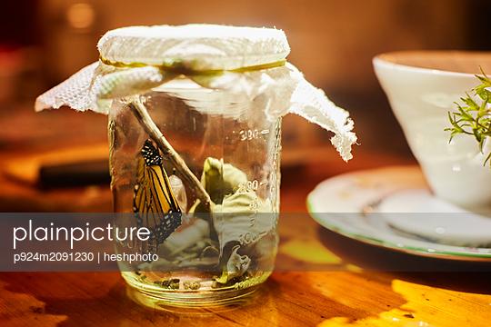 Monarch butterfly in jar - p924m2091230 by heshphoto